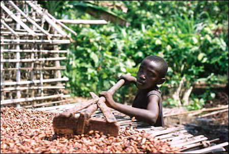 Child Labor in the Cocoa Industry