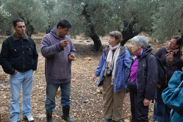 Reality Tours to Palestine also focus on Fair Trade olive oil production in the West Bank.