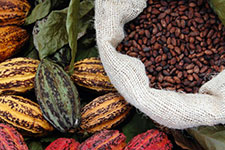 Cocoa beans Photo Credit: Green America