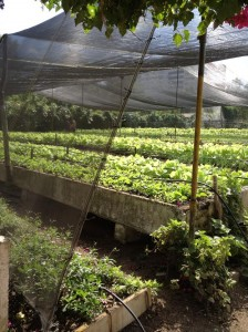 Permaculture Garden in Cuba Photo Credit: The Brooklyn Reader