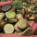 Whole Tagua seeds that have been died  green